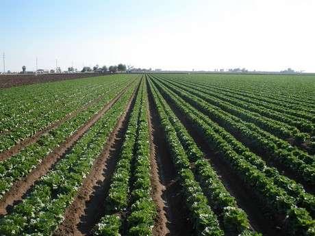 Arizona's warm winter speeding up crop production